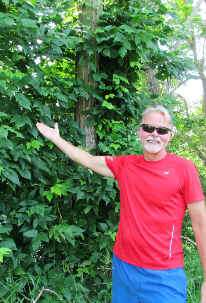 A large poison ivy vine dwarfs six foot tall Jim Lloyd of the Six Rivers Regional Land Conservancy on the banks of the Shiawassee River
