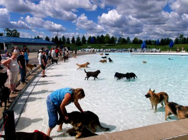 Dogs swim away at Red Oaks Waterpark at the annual Dog Swim.