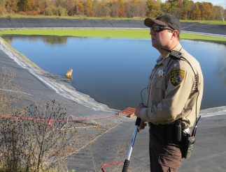 An Oakland County Animal Control Officer looked on as the coyote looked away. The rescue chain fence ladder constructed by Oakland County Park's employees is visible in the image.