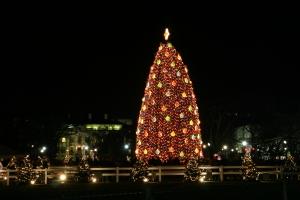 National Christmas Tree (2)