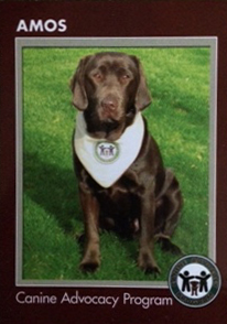 Amos - the first CAP dog.