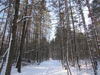 A snowy backcountry trail.