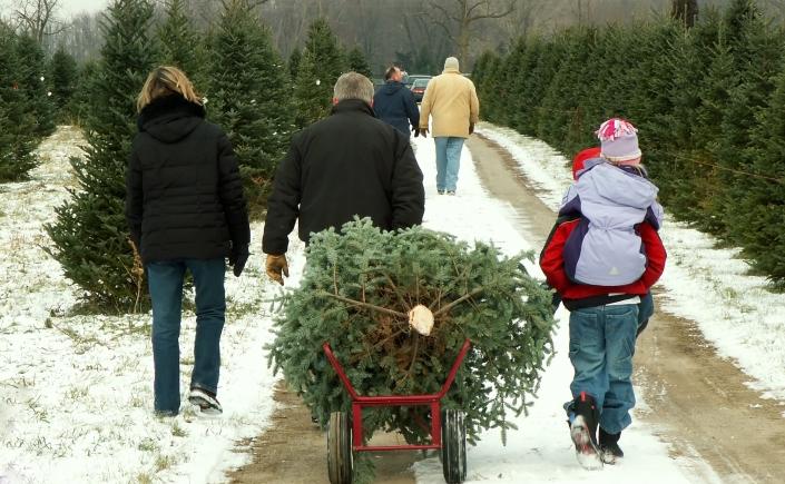 Christmas - tree cutting family.