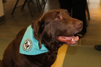 Canine Advocacy Program dog, Amos, waits patiently for the announcement.