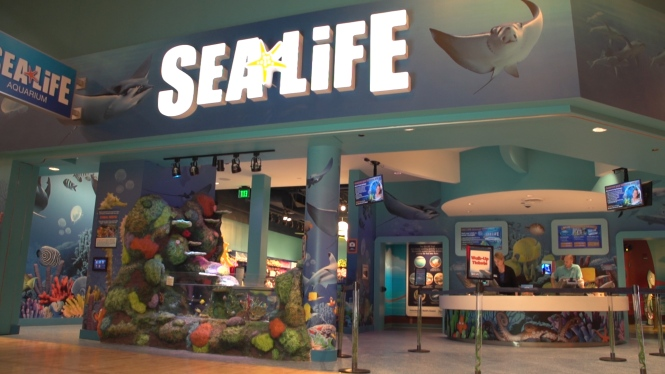 Discover an Underwater World at SEA LIFE Michigan Aquarium