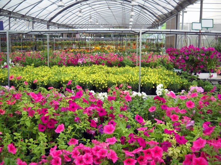 Oakland County Nurseries And Greenhouses Oakland County Blog
