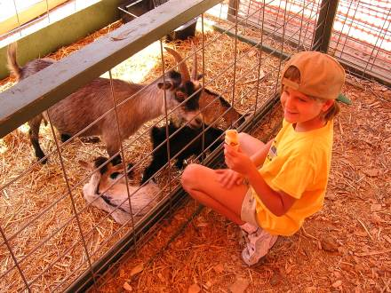 Oakland County Fair Petting Zoo
