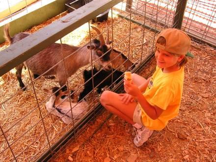 Oakland County Fair Petting Zoo
