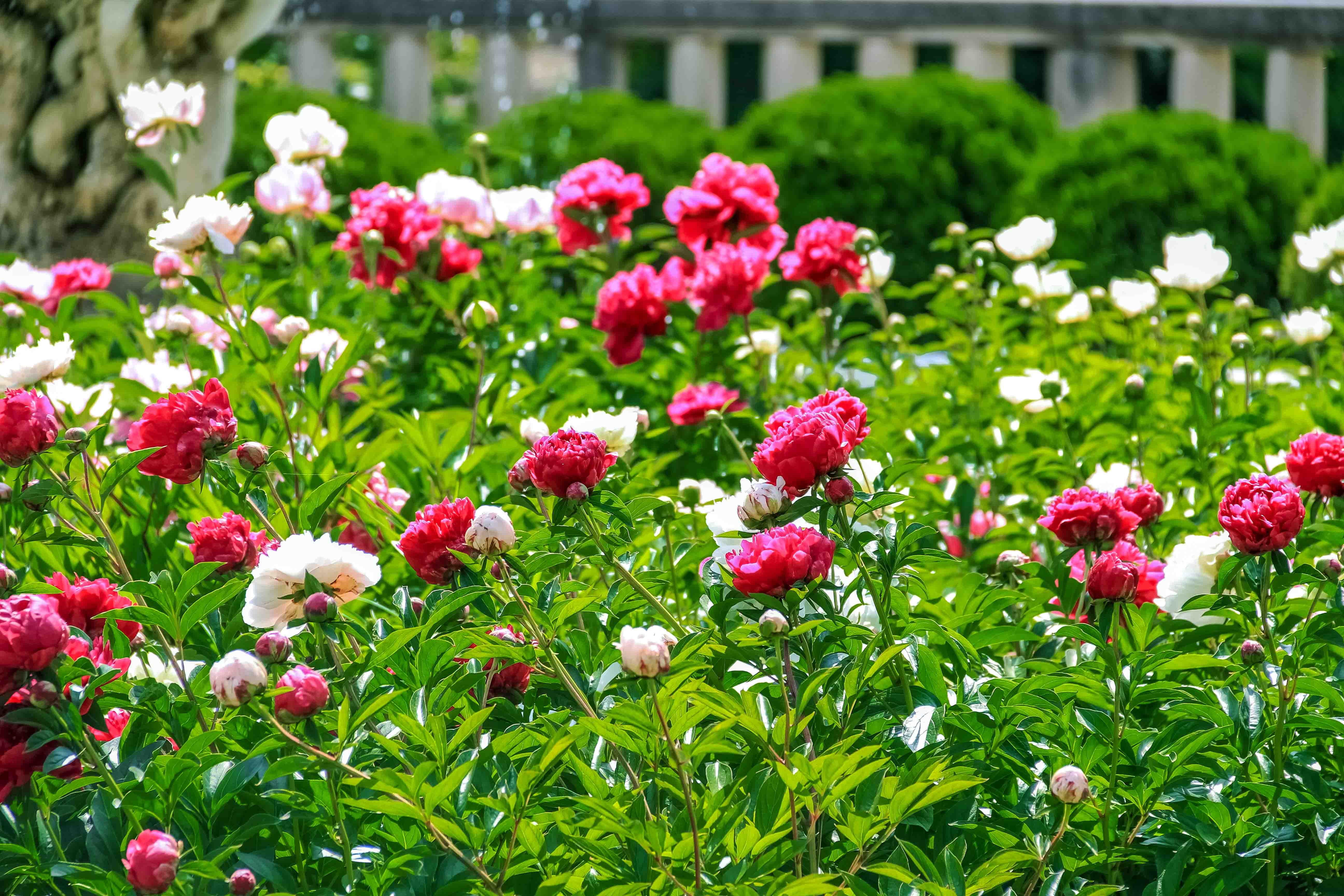 Visit the Breathtaking Cranbrook House & Gardens – Oakland County Blog
