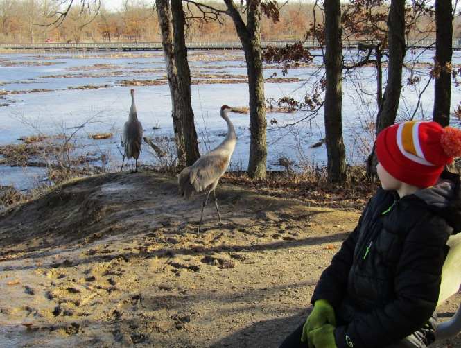 sandhill-crane-carter