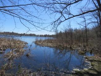 Shore of Cranberry Lake