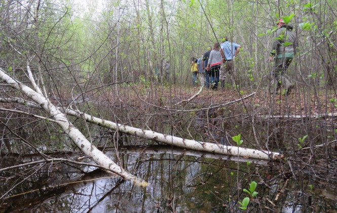 Turtle Woods Preserve