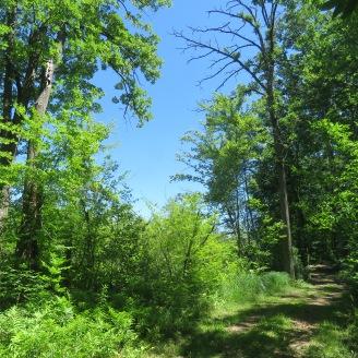 Springfield Oaks Trail