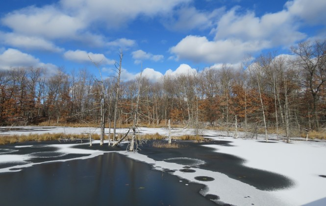 Iced Over Pond