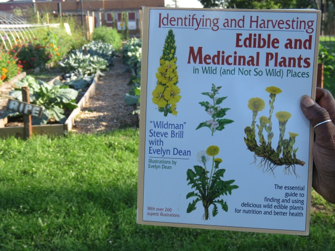 The book: Identifying and Harvesting Edible and Medicinal Plants is held up in a person's hand. Rows of crops and flowers in a community garden can be seen in the background.