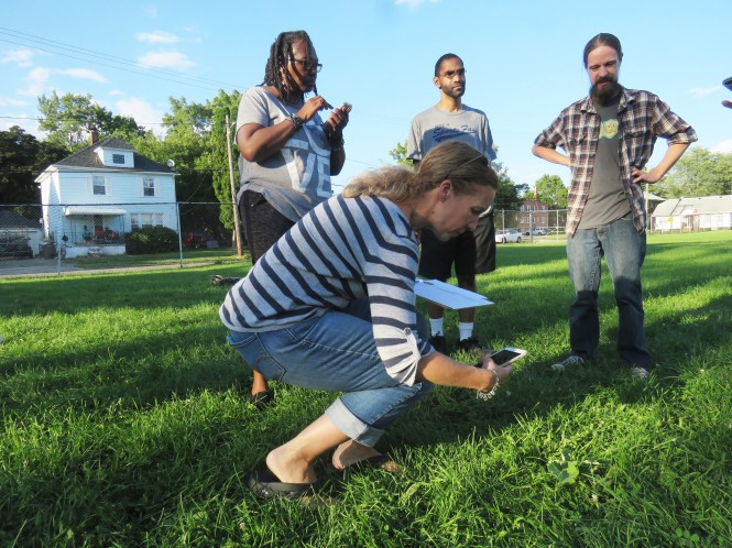 A woman takes a photo with her phone of a weed in the grass. Another woman and two men stand to the side of her watching.