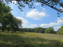 An open field with trees in the distance. The sky is light blue and full of puffy, white clouds.
