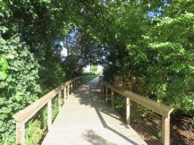 A wooden boardwalk with a canopy of trees above.