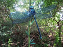 A large dragonfly sculpture in a wooded garden area.