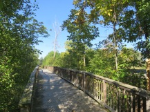 A wooden boardwalk makes a path through a wooded area. The bright blue sky can be seen above the trees.