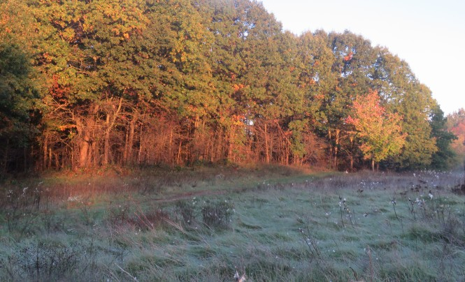 Trees stand in the background and sun glints off of them. Long grasses in front of the trees are shaded and covered in frost.