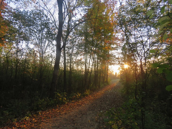 Fallen leaves cover a dirt path leading through trees. The rising sun can be seen through the trees where the end of the path opens up to a meadow.