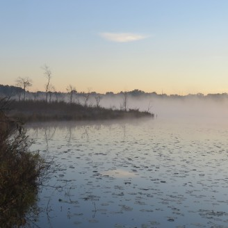 Thick fog rises up over a lake covered in lily pads.