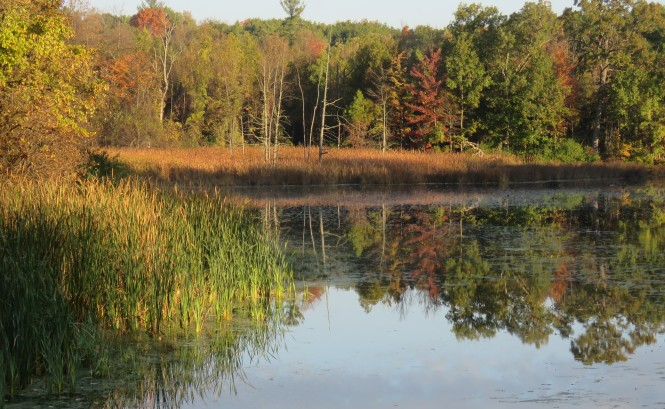 The view of trees changing from green to fall colors of red, orange and yellow from across a body of water. The reflection of the trees appears in the water.
