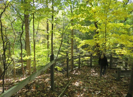 A woman walking to overlook, encased by a wooden rail fence, in a wooded area. Sunlight filters through heavy, greenish yellow foliage.