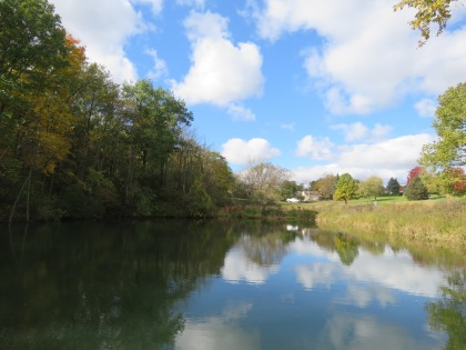 A photo taken from the edge of a pond. The pond is surrounded by tall trees. The blue sky and white puffy clouds reflect into the water below.