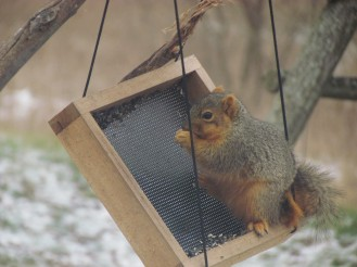 A squirrel stands nibbling bird seed on the edge of a hanging bird feeder tray, tilting it sideways. Snow covers the ground in patches.