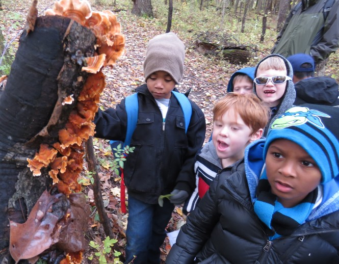 Young boy scouts observe orange shelf fungus that is growing on a tall tree stump.