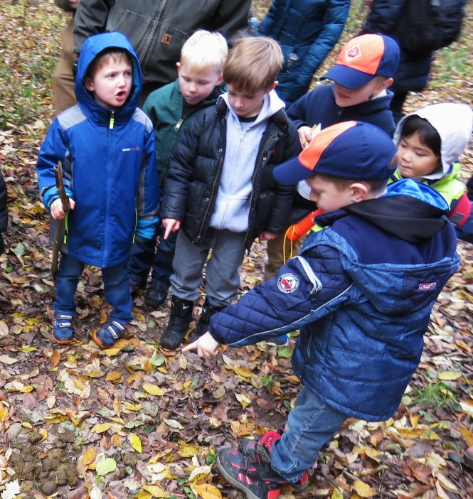 A group of young boy scouts gather around a pile of horse poop, staring and pointing at it.