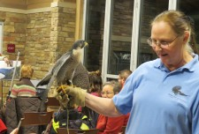 A peregrine falcon sits perched on a woman's hand.