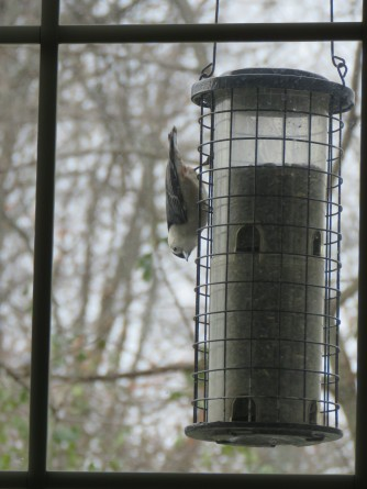 A tube feeder hangs in front of a window on a cloudy day. A small bird is perched upside down on the side of the feeder.
