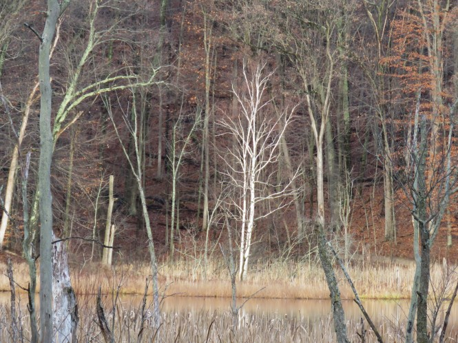 A view of trees in the fall from across the lake