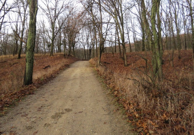 A straight dirt path in a wooded area.