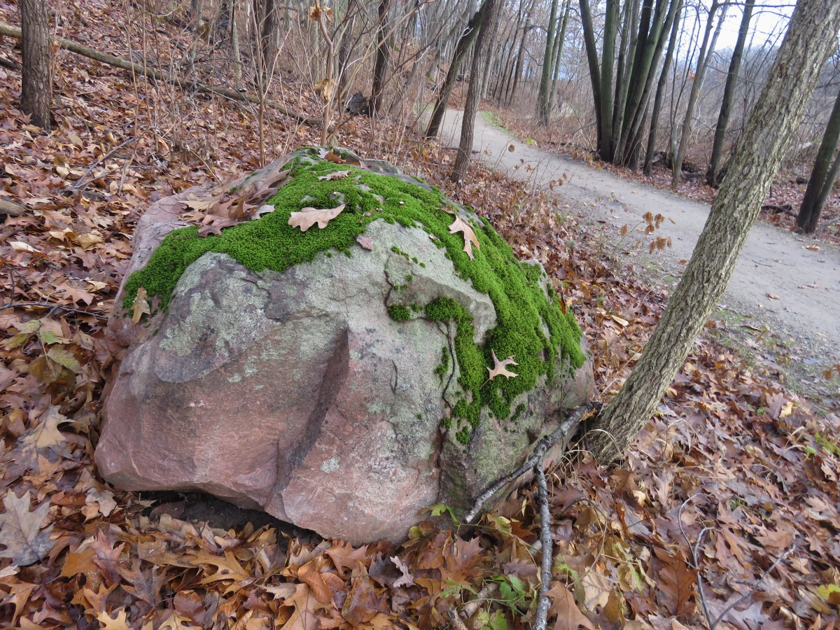 glacial erratic covered in spotty green moss.