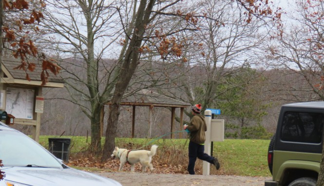 A man jogs behind his large dog who is on a leash at a park. A large sign with a map, a tree and gazebo are in front of them.