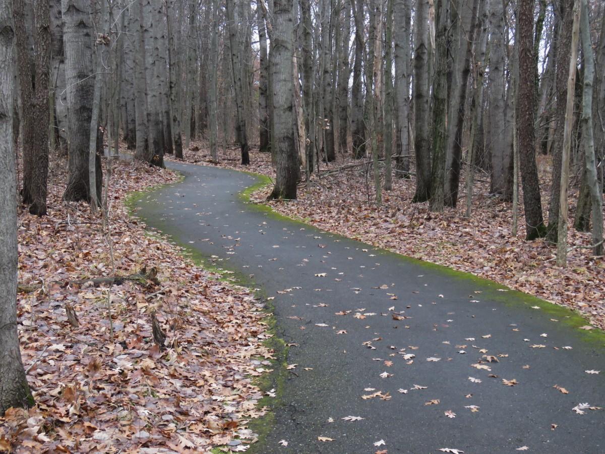 An asphalt path winds through a wooded area