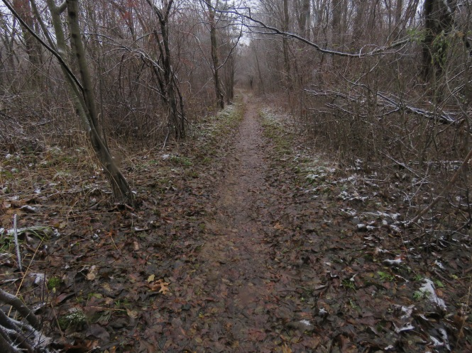 A thin trail through the woods on a dreary day.