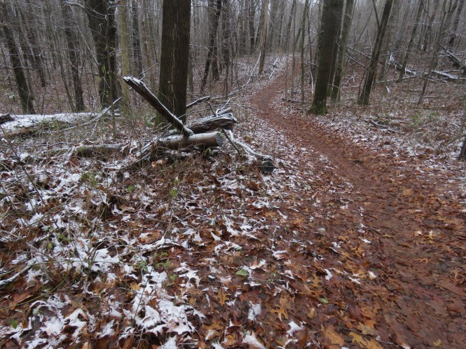 A trail winds down through the woods.