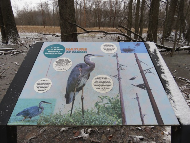 A colorful interpretive sign detailing the Great Blue Heron Rookery Restoration Project