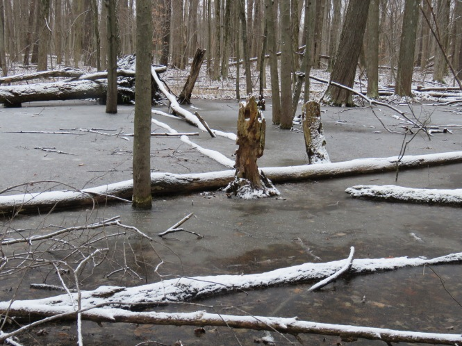 A marshy area at the edge of woods that has frozen