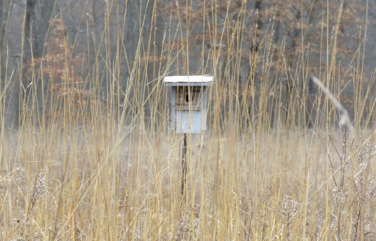 An old bluebird house amidst a sea of tall big bluestem grasses
