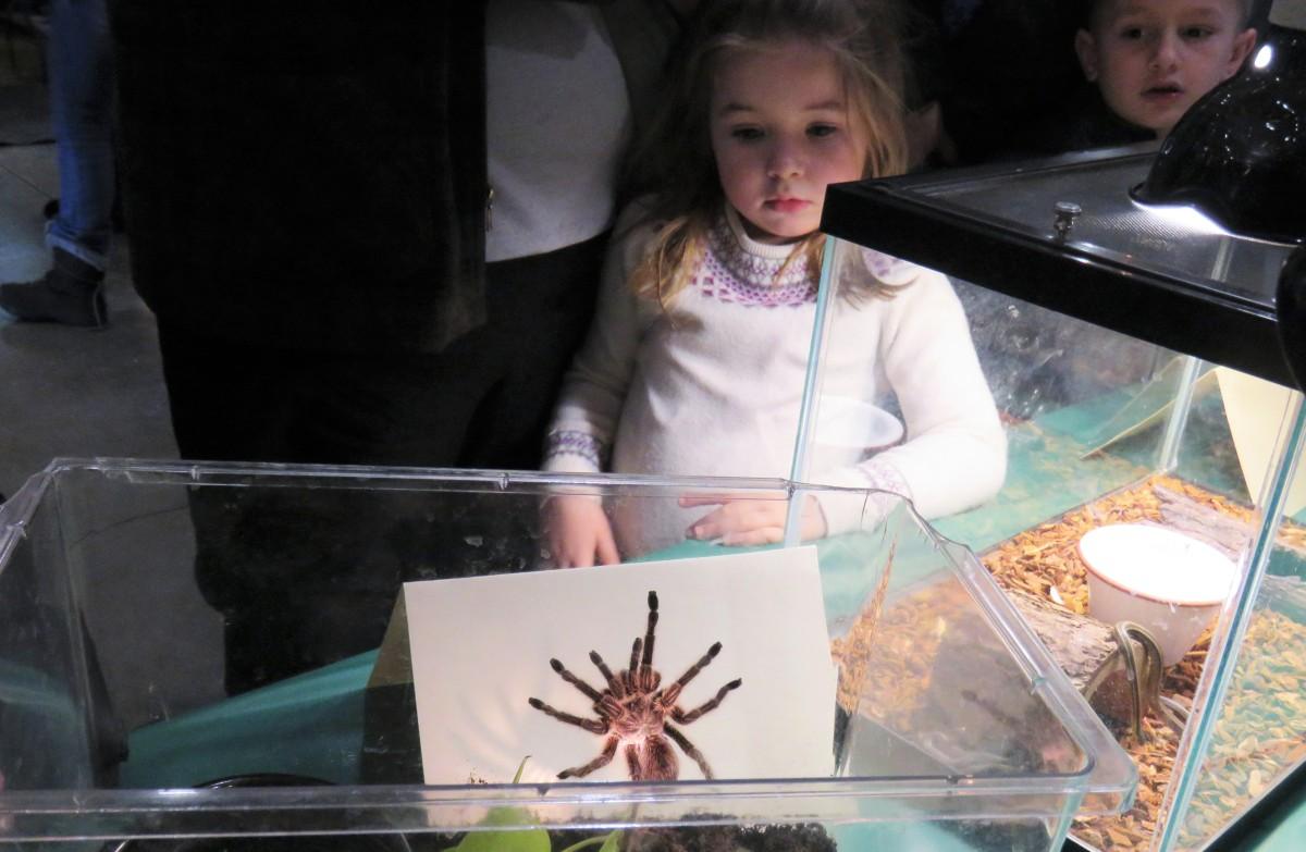 A young girl looks at a tarantula in an aquarium