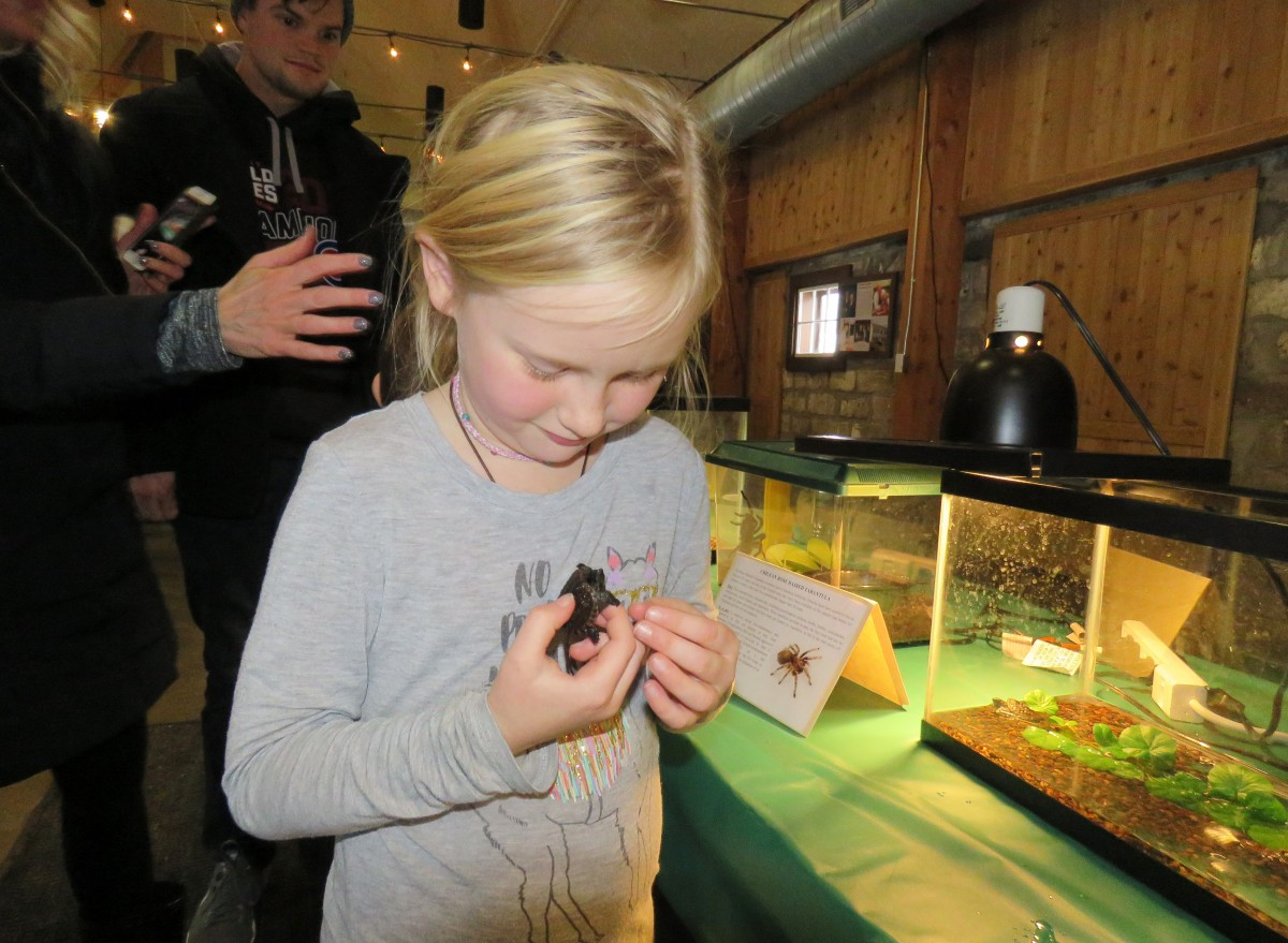A young girl holds a baby snapping turtle