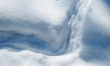 skunk tracks deep snow