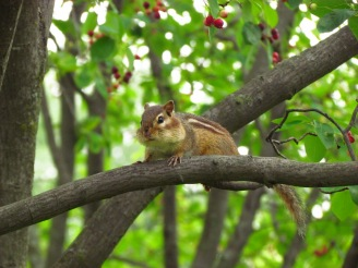 chipmunk in tree