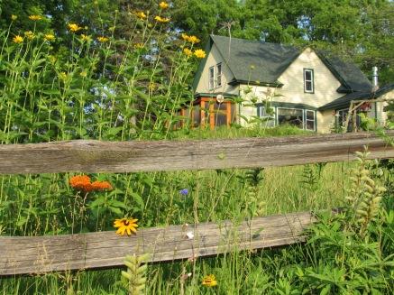 wildflower meadow front yard